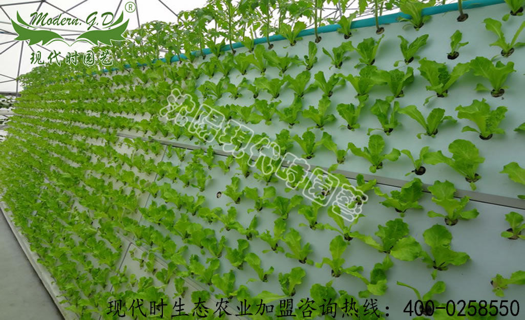 Aerosol cultivation