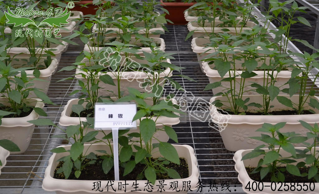 Substrate cultivation