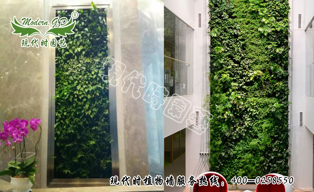 Wall-mounted plant wall