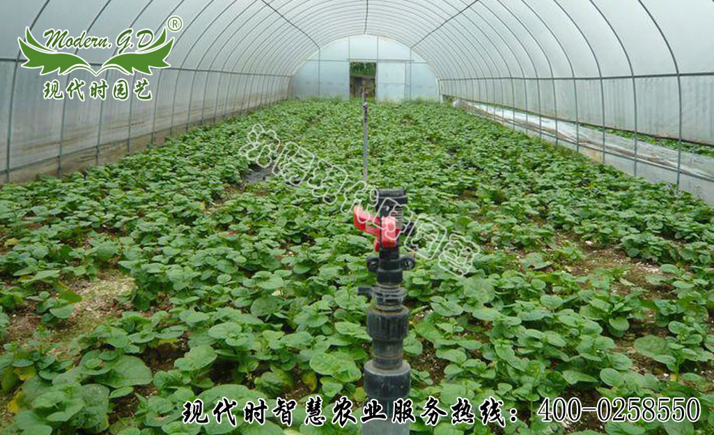 Automatic water-saving irrigation